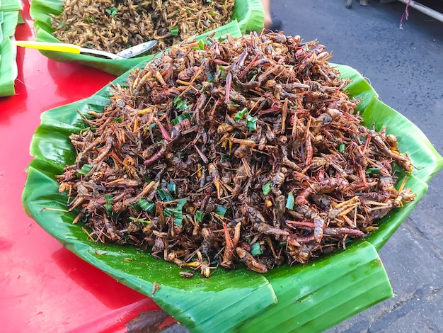 昆虫の揚げ物 Premium写真