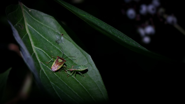 Insects on a green leaf Free Photo