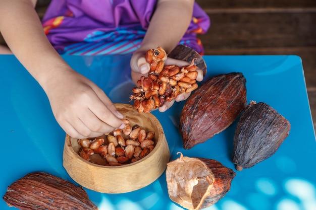 カカオ豆の選別を検査する Premium写真
