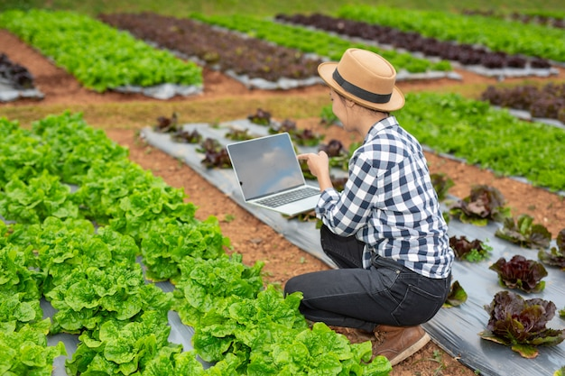 Inspection of vegetable garden quality by farmers Free Photo
