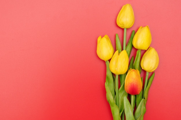 International women's day with tulip flowers on red background Premium Photo