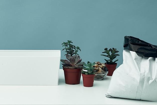 屋内植物の準備を移植するための在庫 Premium写真