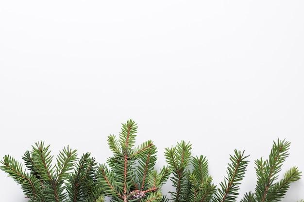 Ir tree branches Free Photo