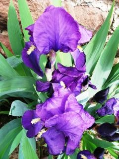 Trees Tree 598453 further Iris Germanica 532940 likewise Rock Climbing 1 368128 likewise  together with View All. on landscape and garden design courses
