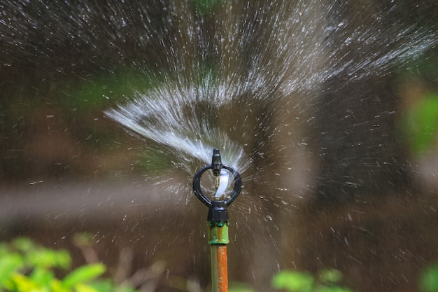 Irrigation of agricultural field Premium Photo