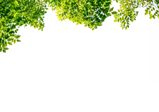 Isolated of beautiful tree branch with colorful leaf on white background. clipping path and copy space- image. Premium Photo