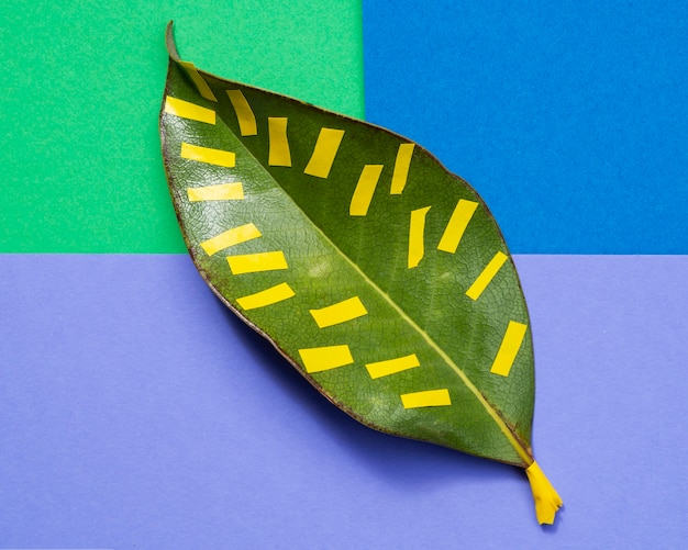 Isolated leaf with colourful background Free Photo