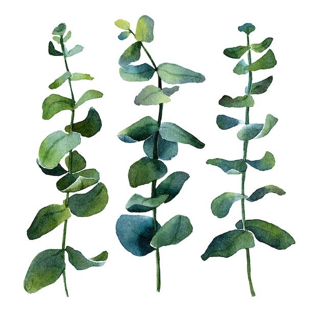ローズマリー、ユーカリ、オリーブ、その他の緑の植物の孤立した水彩画の画像。さまざまな形と色合い Premium写真
