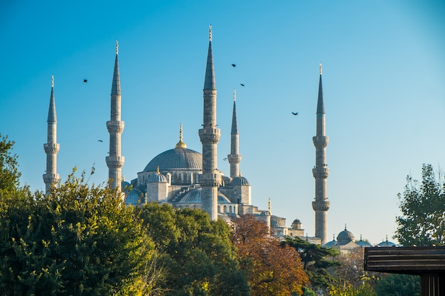 Istanbul blue mosque Premium Photo