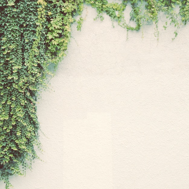 Ivy plant on white wall with retro filter effect Free Photo