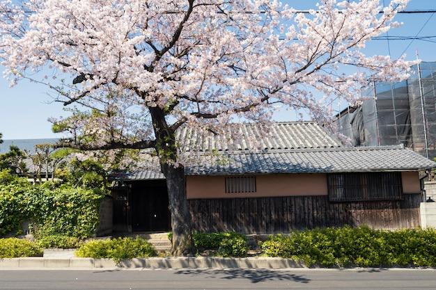 Japanese house with white cherry blossom Premium Photo