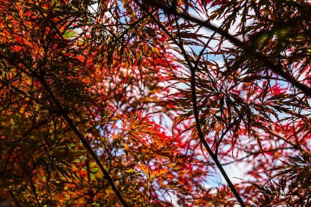 公園で晴れた夏の日にイロハモミジ。小さなグリップ Premium写真