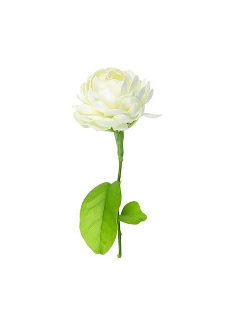 ジャスミンの花は白い背景で隔離 Premium写真