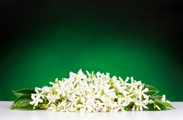 Jasmine flowers Premium Photo