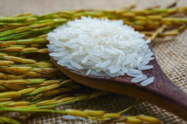 Jasmine white rice with gold grain from agriculture farm. Premium Photo