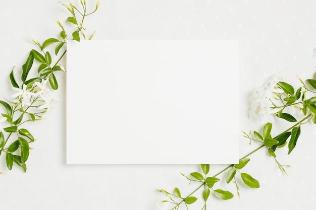 白い背景の上のウェディングカードとjasminum auriculatum花小枝 無料写真