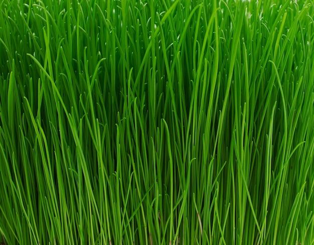Сочная молодая зеленая текстура травы Бесплатные Фотографии