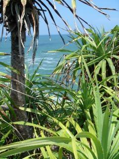 Jungle beach Free Photo