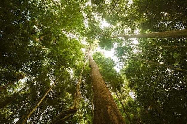 ジャングルの森。美しさの自然の風景 Premium写真