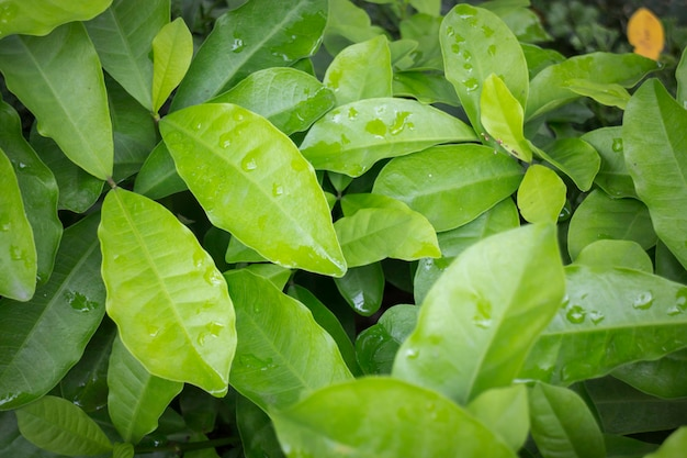 Jungle green leaves in tropical garden Premium Photo