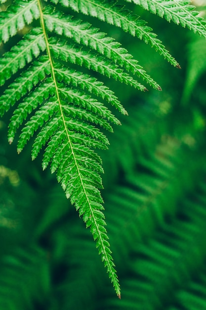 Jungle plants background. tropical thickets and bushes in the jungle. Premium Photo