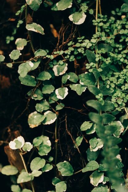 Jungle plants texture Free Photo