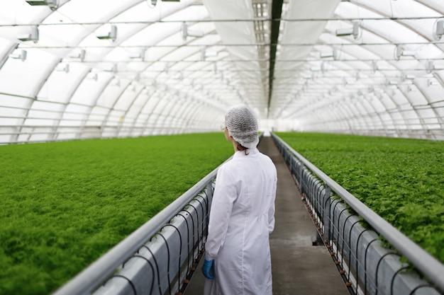 Младшие ученые-агрономы изучают растения и болезни в теплице с петрушкой Бесплатные Фотографии