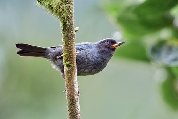 垂直方向の枝に腰掛け幼い鳥 Premium写真