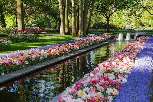 Keukenhof - самый большой цветник в европе - голландия Premium Фотографии