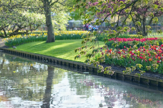 春の間に公園keukenhofの湖。セレクティブフォーカス Premium写真