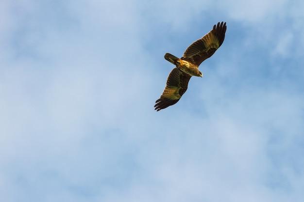 Kite in flight on sky Premium Photo