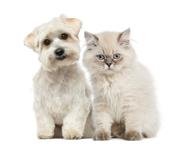 子猫と犬が一緒に座ってカメラを見て Premium写真