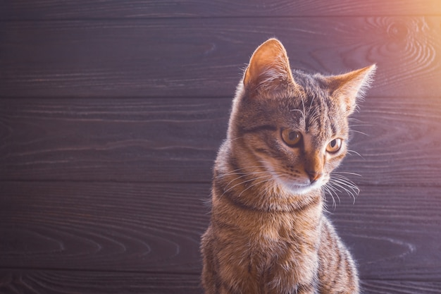 Kitten closeup on a wooden background with copy space Premium Photo