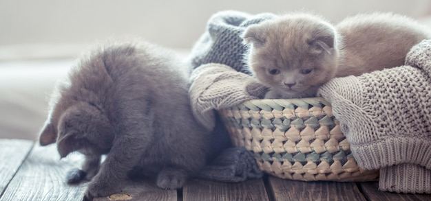 かごの中の子猫 無料写真
