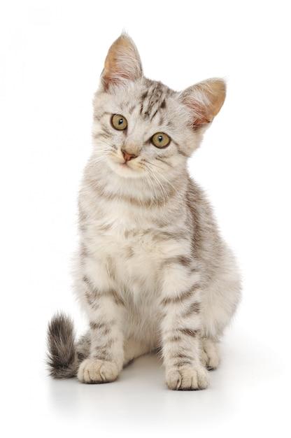 分離された子猫 Premium写真