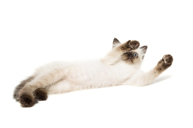 Котенок на белом фоне Premium Фотографии