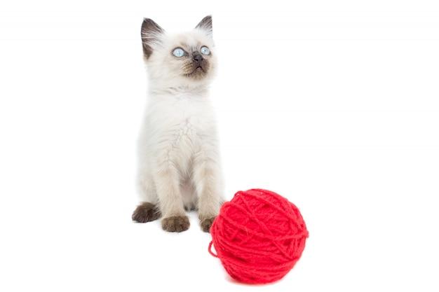 Котенок на белом Premium Фотографии