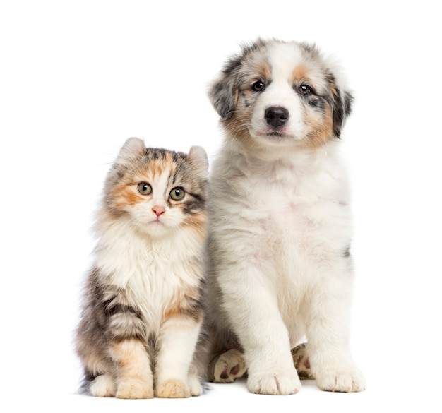 Kitten and puppy sitting isolated on white Premium Photo