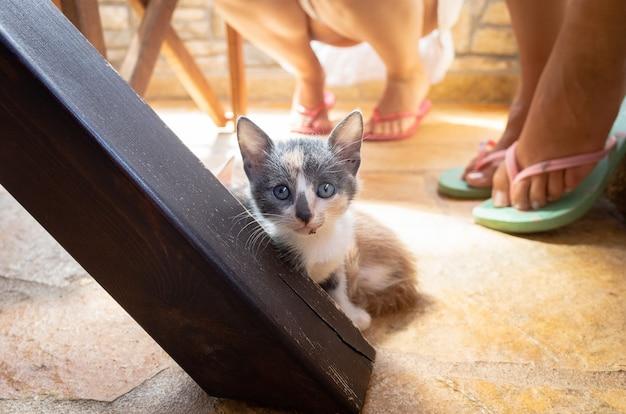 カメラをまっすぐ見ている台所のテーブルの下の子猫 無料写真