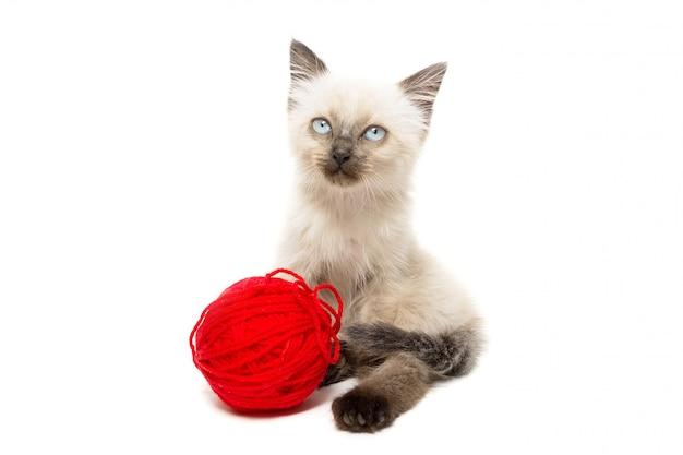 Kitten on a white background Premium Photo