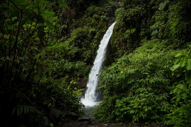 La fortuna waterfall in a forest at costa rica Free Photo