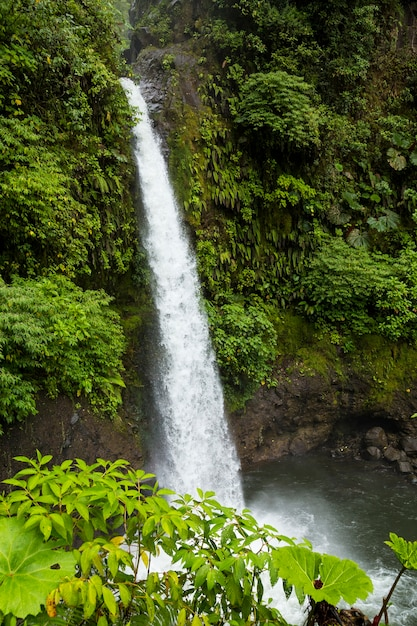 La fortuna waterfall in tropical forest at costa rica Free Photo