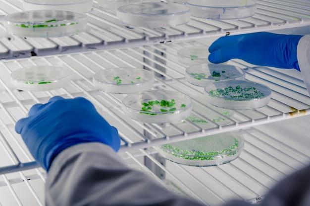Лаборант исследует вещество на чашках петри во время исследования коронавируса Бесплатные Фотографии