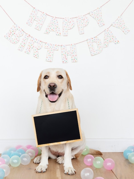 Labrador retriever at a birthday party with an empty board hanging on its neck Free Photo