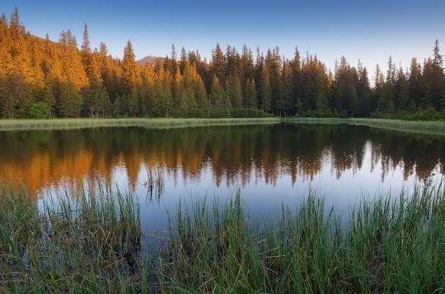 Озеро в горном лесу. карпаты Premium Фотографии