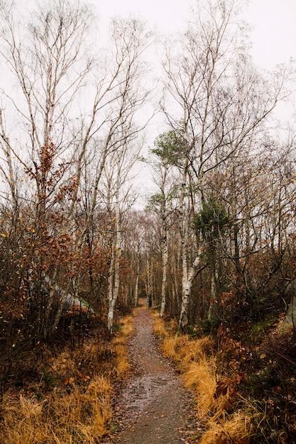 Озеро посреди леса с высокими безлистными деревьями Бесплатные Фотографии