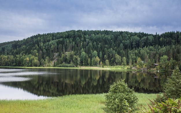 Lake in karelia. summer natural landscapes in travel. north of russia Premium Photo