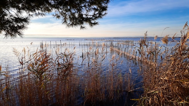 Lake of the lagoon of valencia with fishing nets between the reeds Premium Photo