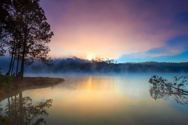 Lake and pine forest on morning time Premium Photo