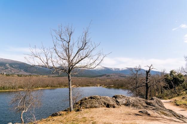 茂みと葉のない木々に囲まれた湖 無料写真